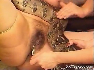 Rough snake porn on cam with amateur sluts with fat pussies