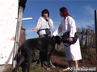 Redhead gets her pussy licked by a black dog outdoors