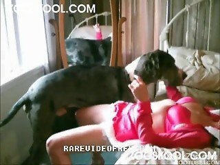 Bedroom zoo fuck play with a redhead and her dog