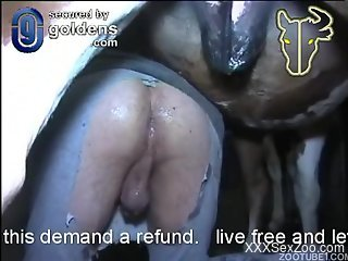 Man in torn pants analyzed and creampied by brown horse in barn